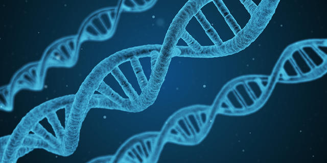 using dna to reverse engineer your family tree computer science